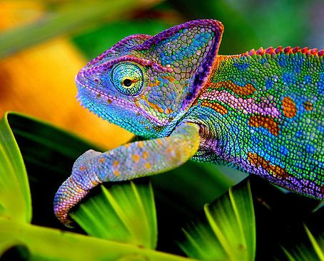 Chameleon vs. Bamital